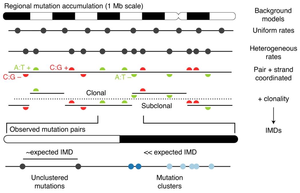 HyperClust statistical method for detecing mutation clusters